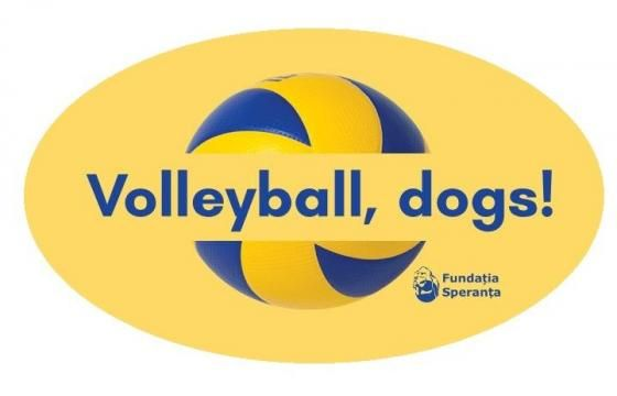 Volleyball, dogs!