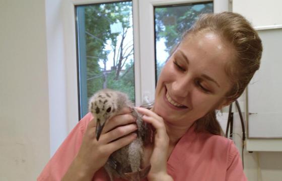 Cel mai frumos cadou de ziua mea - Racordarea la rețeaua electrică a Centrului de Salvare și Reabilitare a Animalelor Sălbatice
