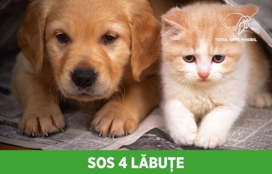 SOS 4 LĂBUȚE