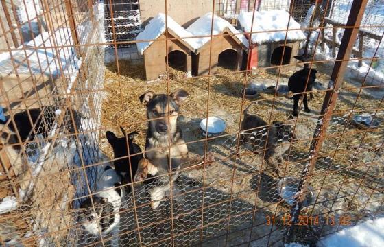 Ajutor pentru hrana căţeilor din adăpostul ROBI