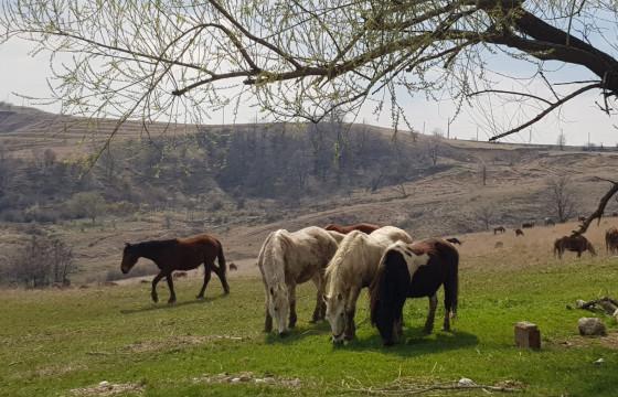 Hrana pentru caii salvati 2021