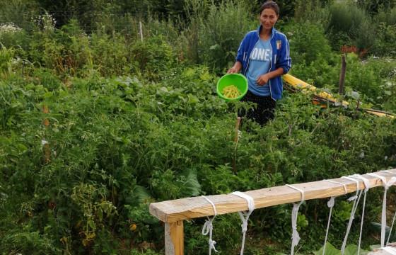 Ponorâta grădinărește