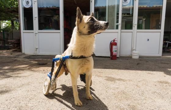 Sustine Fundatia Adapostul Speranta in ingrijirea cainilor paraplegici!