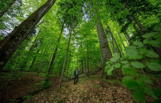 Protejează pădurile României