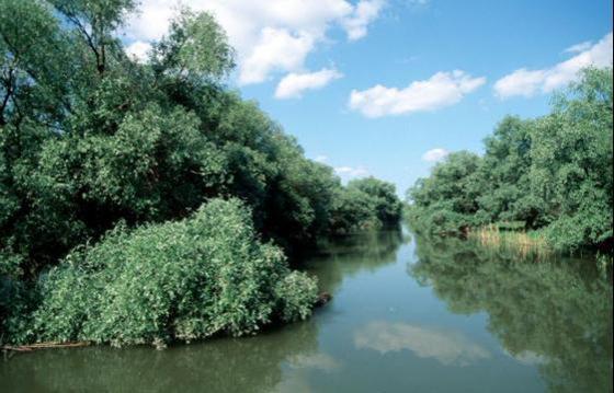 Susține râurile și Delta Dunării