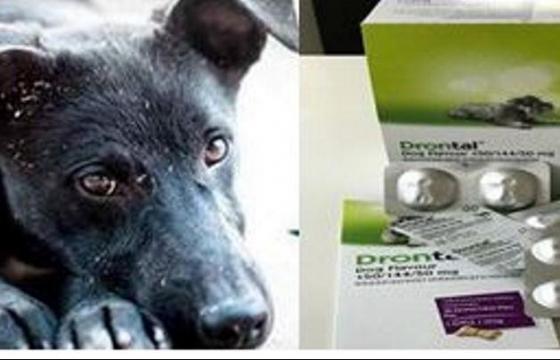 Deparazitare interna pentru animale