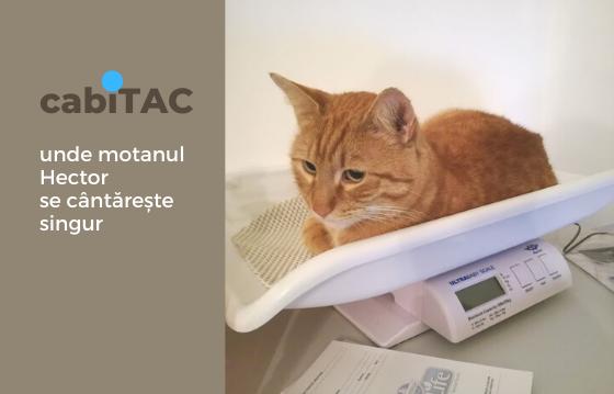 CabiTAC. Primul cabinet veterinar social din România
