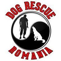 Asociatia Dog Rescue Romania